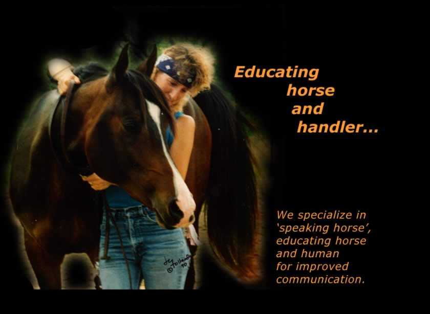 Training Horse & Handler